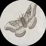 Woodfall Wings
